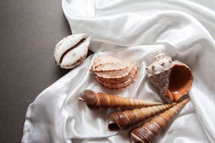 Beautiful shells on white silk drapery Stock Photos