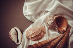 Beautiful shells on white silk drapery Royalty Free Stock Images