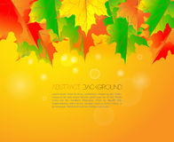 Beautiful shining autumn backdrop with falling Royalty Free Stock Images