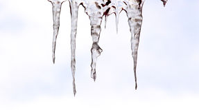 Beautiful shiny transparent icicles hang Royalty Free Stock Photos