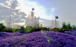 Beautiful ships from plants. With purple flowers stock image