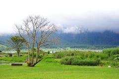 Beautiful shore of Bratan Lake in Bali Stock Photos