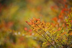 Beautiful shot of back light red leaves Stock Image