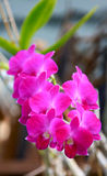 Maldives flora Royalty Free Stock Photography