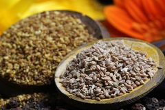 Carom seeds Stock Photography