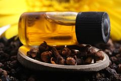 Clove oil. Beautiful shot of clove oil bottle on clove pods Stock Photography