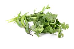 Coriander and chillies Royalty Free Stock Photography