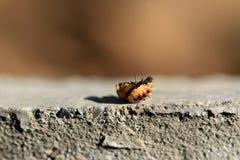 Dead bug stock photography