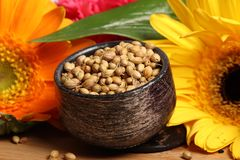 Dry whole coriander seeds Royalty Free Stock Photos