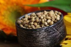 Dry whole coriander seeds Stock Images