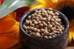 Dry whole coriander seeds Royalty Free Stock Image