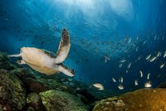 Beautiful shot of fish enjoying their underwater life to the fullest
