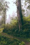 Beautiful shot of a forest in the evening stock image