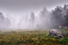 Beautiful shot of a grassy field with plants and a forest in a fog in the background