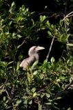 Hornbill bird. Beautiful shot of hornbill bird in jungle Stock Image