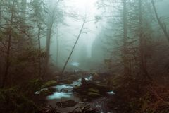 Beautiful shot of a lake in a forest in a rocky terrain royalty free stock images