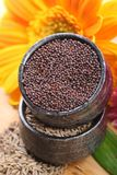 Mustard and cumin seeds Stock Image