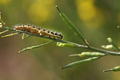 Caterpillar stock photos