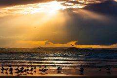 Beautiful shot of seagulls on a beach shore with the sun shining behind the clouds