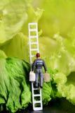 Vegetable shoppping Stock Photos