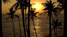 Beautiful shot of sunset from tropical beach. Silhouettes of palm trees on tropical island. Fantastic sunet sky and blicks on a water stock footage
