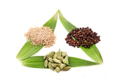 Three spices Stock Photography
