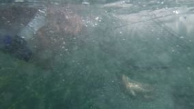 Transition from bubbles to a man swimming. A beautiful shot of a transition effect from the bubbles to a man swimming on a clear water stock footage