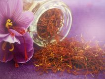 Flowers of saffron Stock Photography