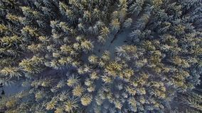 Beautiful silent forrest landscape in snow winter stock footage
