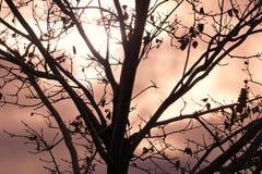 Beautiful Silhouette Against Overcast Sky stock photo