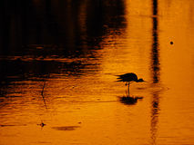 Beautiful silhouette of bird on golden surface Royalty Free Stock Photography