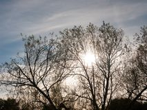 Beautiful silhouette of branches in sky with sun royalty free stock photography