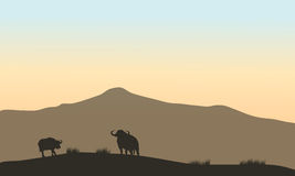 Beautiful silhouette of bull in hill Stock Photography