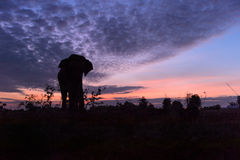 Beautiful silhouette of the elephant against an amazing sunset. Stock Images