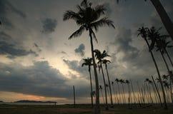 Beautiful silhouette image of palm tree during sunrise sunset. Stock Photo