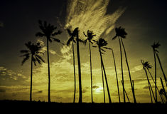 Beautiful silhouette image of palm tree during sunset sunrise Royalty Free Stock Photos