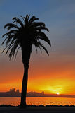 Beautiful Silhouette of Palm Tree and Sunset Royalty Free Stock Photos