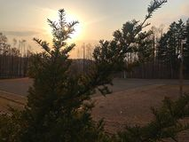 A beautiful silhouette of small pine tree. In the park with a beautiful sun set Royalty Free Stock Photography