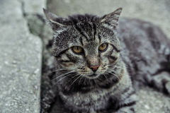 Beautiful silver cat chilling. On the street royalty free stock photo