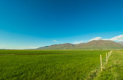Beautiful simple landscape with green field and mountains. Royalty Free Stock Images