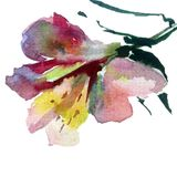 Watercolor art background colorful flower Stock Photo