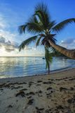 Single palm on paradise beach, seychelles 2 Stock Photos