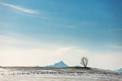 Beautiful single tree in a Lofoten landscape with mountains in b Royalty Free Stock Image