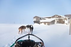 A beautiful six dog teem pulling a sled. Picture taken from sitting in the sled perspective. FUn, healthy winter sport in north. Beautiful, foggy winter stock images