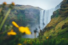 Skogafoss waterfall in Iceland with flowers