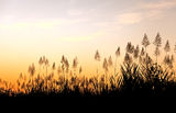 Beautiful sky behind tropical grass Royalty Free Stock Photography