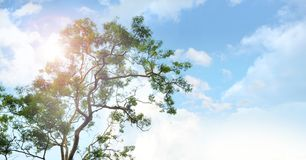Beautiful sky on big tree. Summer and tropical forest in Indonesia Royalty Free Stock Photography