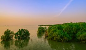 Beautiful sky and clouds at mangrove forest . Tropical sea with royalty free stock photo