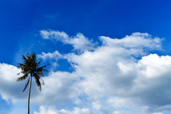 Beautiful sky and coconut tree Royalty Free Stock Image