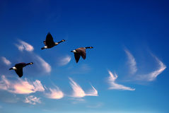 Beautiful sky with flying birds natural background Stock Photos